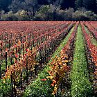 Russian River Autumn  by Mike Stone