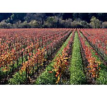 Russian River Autumn  Photographic Print