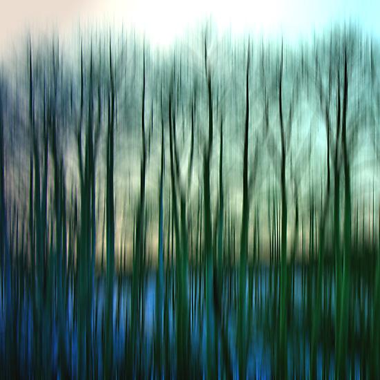 The Birches by Varinia   - Globalphotos