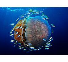 Jellyfish with fish Photographic Print