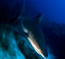 Shark by Carlos Villoch