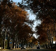 Tree Lined Street ~ Brigham City, Utah by Jan  Tribe