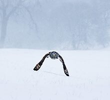 Skimming the snow by Mike Ashton