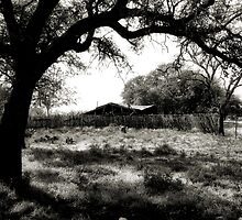 Under The Shade Of An Ole Tree ~ 2 ( BoneYard Series ) by Carla Jensen