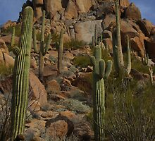 North Scottsdale - Pinnacle Peak - Arizona by Bo Insogna