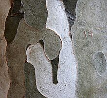 Figures in Bark by Haydee  Yordan
