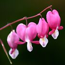 Bleeding Hearts by JaimeWalsh
