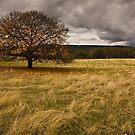Falling Leaves by Jack Jansen