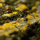 Ladybug by Vincent Teh