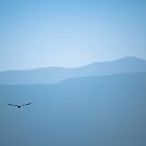 Flight in Blue by Kory Trapane
