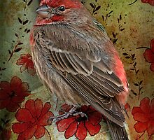 Fancy Finch by Bonnie T.  Barry