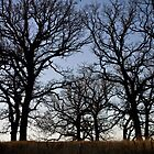 Perfect Oak by Nicholas Stankus