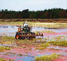 Cranberry Harvest 2 by scottnj61