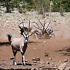 Oryx | Namibia by Olwen Evans