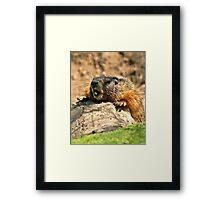 bored marmot Framed Print