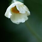 White anemone with stem by Themossgirl