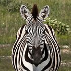 The star of stripes | Namibia by Olwen Evans