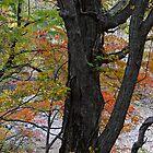 Jozankei, Sapporo by AnnieD