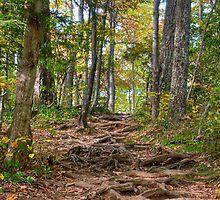 Steps on a Trail by WandaKrack