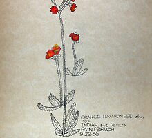 Orange Hawkweed by annimoonsong