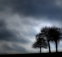 Three Trees in Winter by rosedew
