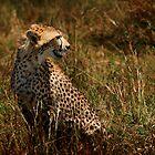 Wild & Free - Cheetah in the Masai Mara by StuartGLoch
