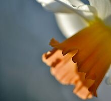 Narcissus in Light by Themossgirl