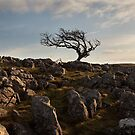Bordley On Malham Moor by SteveMG