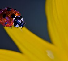 Red on Yellow by markosixty6