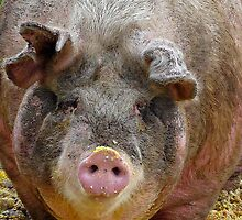 Happier Than A Pig In Slop! by Heather Haderly
