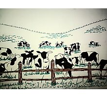 Cows in field Photographic Print