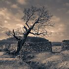 Leaning Tree, Bradgate Park by Andy Stafford
