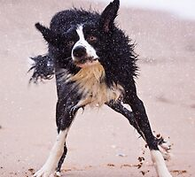 Crazy dog shaking after having a swim by Gabor Pozsgai