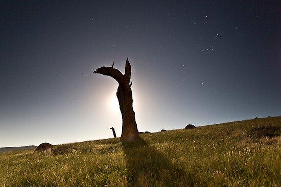 Donnie Darko by Alistair Wilson