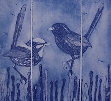 Superb Fairy Wrens by jobanana