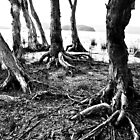 Twisted roots by Alex Howen