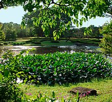 Lotus Leaves, Tokyo Imperial Palace Gardens  by jojobob