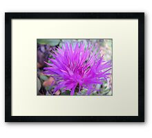 Gentle flower. Framed Print