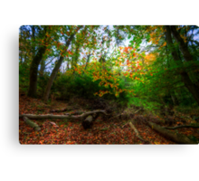 In The Forest... Canvas Print