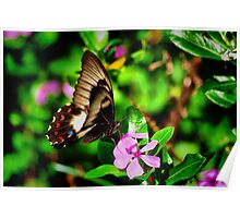 Butterfly At Dinner Poster