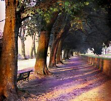 Shadows & Tall Trees by TravelerScout