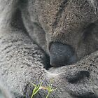 Sleepy koala. by ellismorleyphto