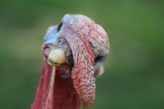 Gobble, gooble, guh??? by ellismorleyphto