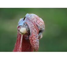 Gobble, gooble, guh??? Photographic Print