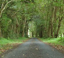 Australian Country Lane - Tenterfield NSW by CasPhotography