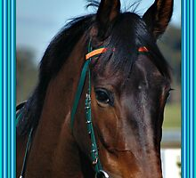 HORSE LOVER CHRISTMAS CARD BLUE - MERRY CHRISTMAS by Cheryl Hall