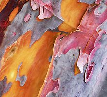 Tree Bark by Roz McQuillan