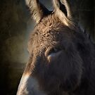 Burro by Kenton Elliott