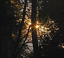 The Rising Sun by laureenr