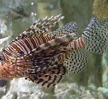 Real Fancy ~ Scorpion Fish by Clive